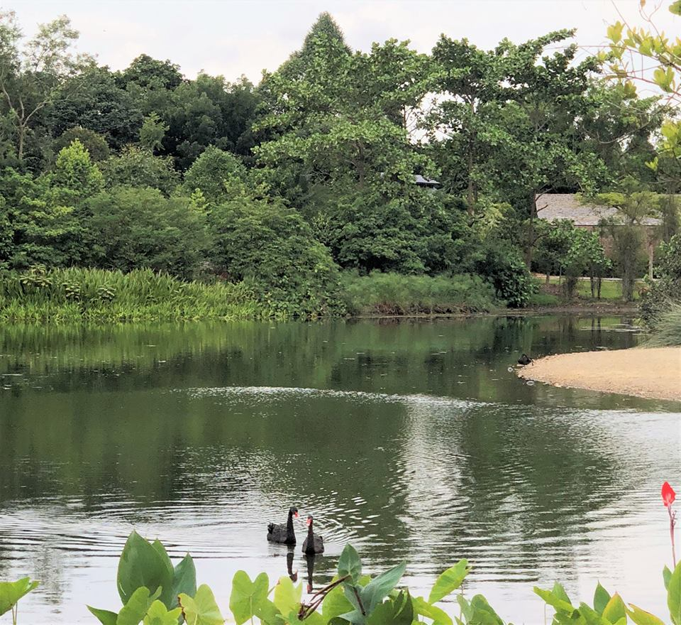 S Pore Botanic Gardens Lake Drying Up Likely Because July August 2019 Way Too Hot Mothership Sg News From Singapore Asia And Around The World