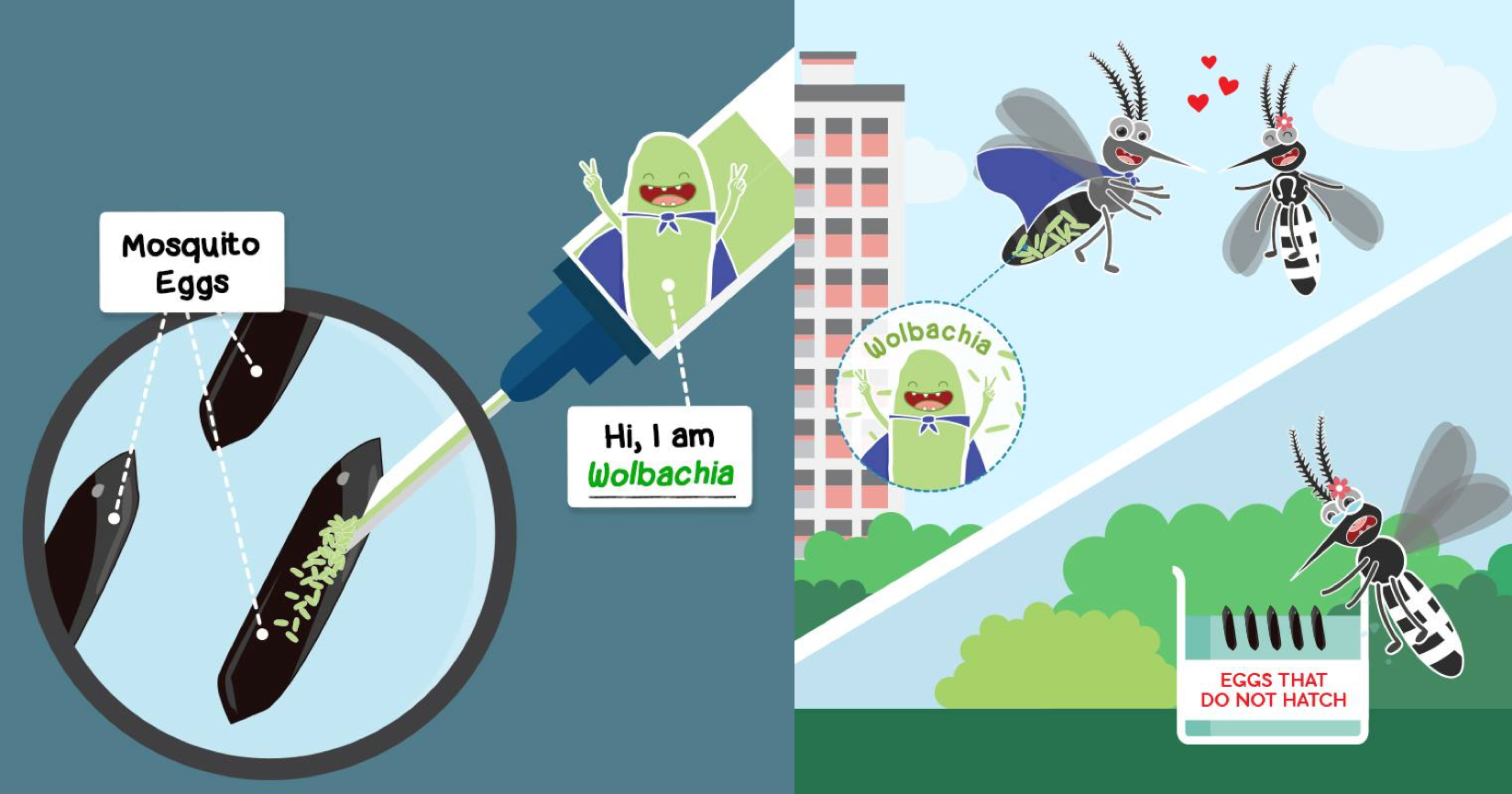 Wolbachia erradicaría moscos con dengue en México que incluso ya se adaptan a lugares con menos chances de sobrevivir