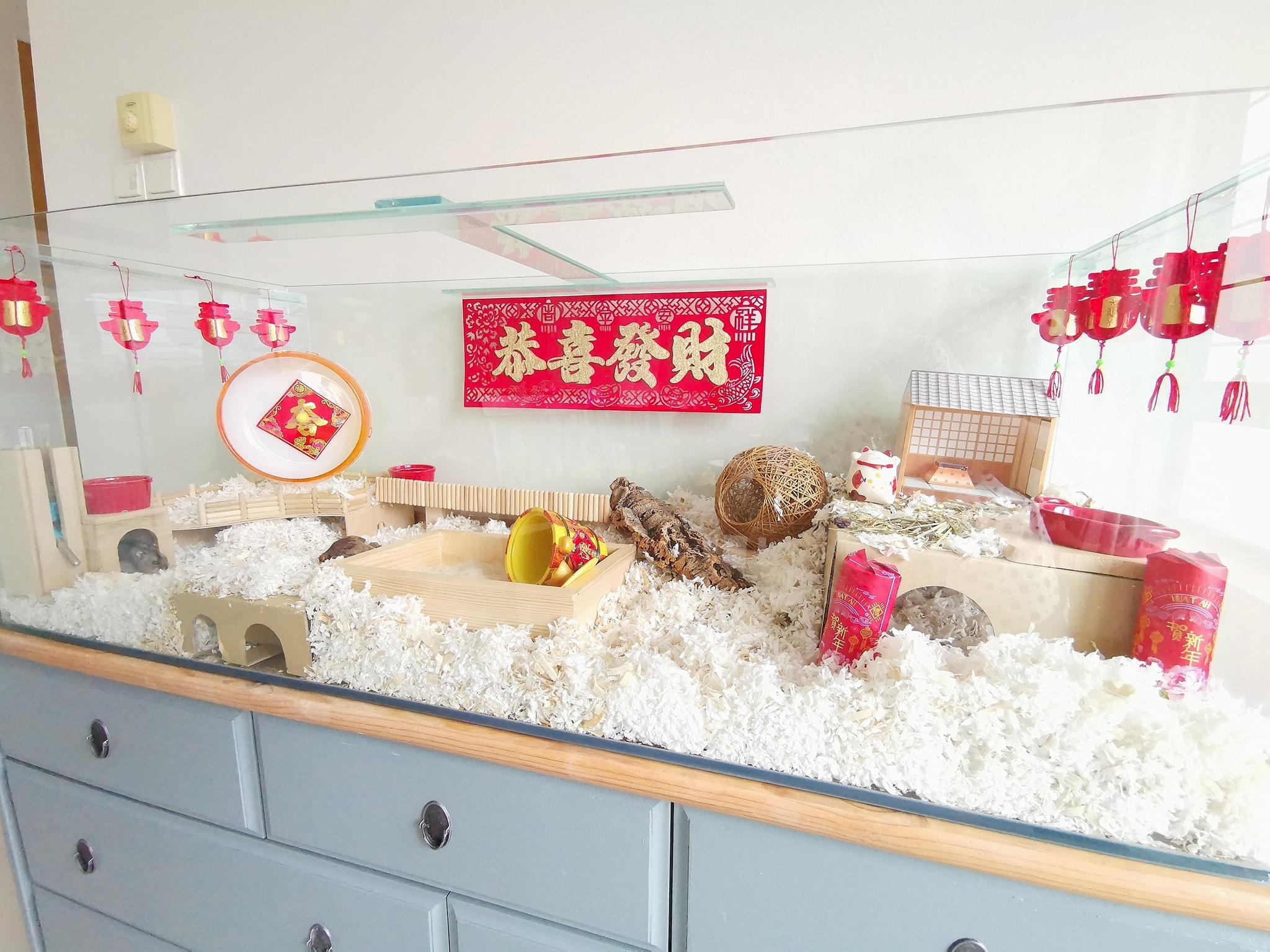 Erica's CNY hamster cage setup