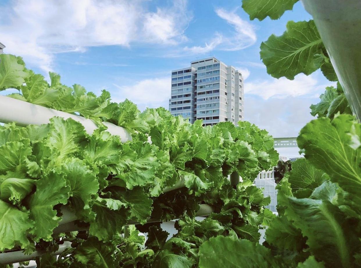 Singapore Food Agency