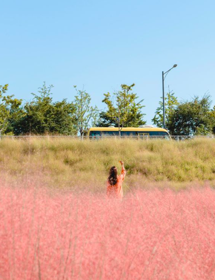photo of instagram shot in nari park pink grass