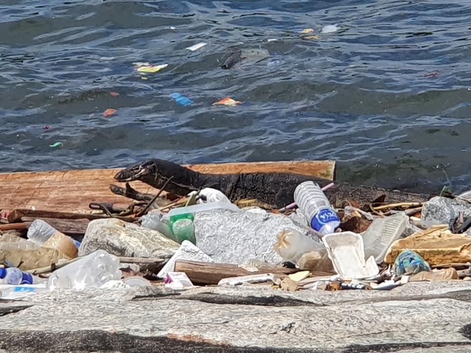 photo trash at coney island