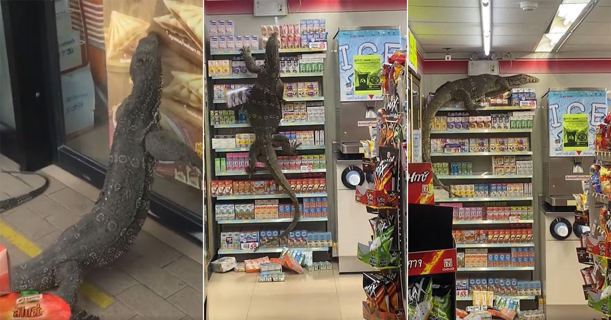 monitor-lizard-thailand-7-11.jpg