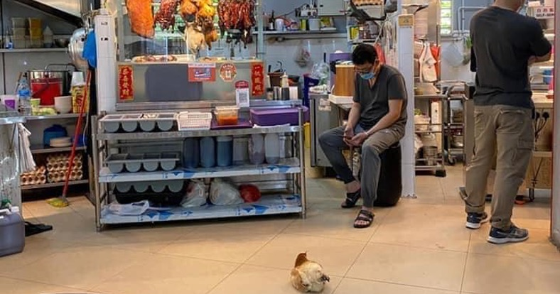 'Brave chicken' nonchalantly chills in front of stall selling roast chicken