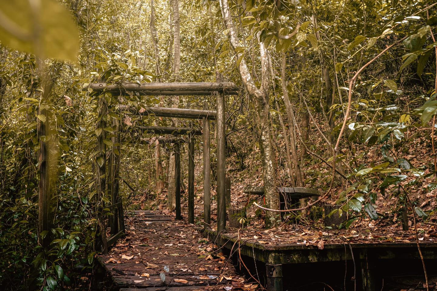 Abandoned park in Bukit Batok contains Torii gates structure, disused well & sheltered hut - Mothership.SG - News from Singapore, Asia and around the world