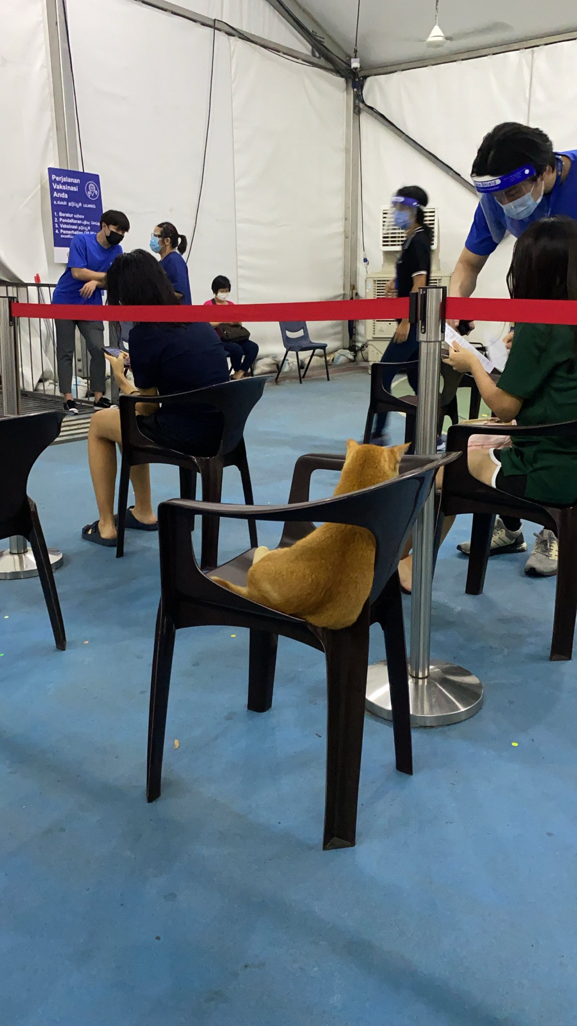 Cat Waits For Vaccination in Singapore
